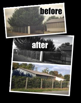 Hedge Trimmer, Chain Saw, Hard work, Hedge, Châtellerault, UPC, EPU, Église Pentecôtiste Unie