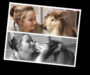Collie, pet dog, dog, dogsitting