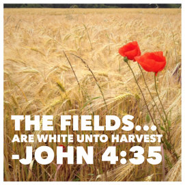 John 4:35, Bible, Quote, devotion, missions, global missions, UPCI