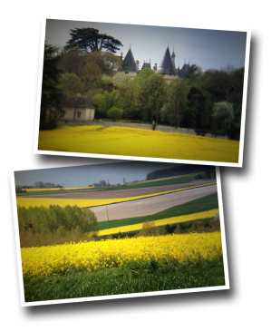 Colza, Rapeseed, Beaumont, Naintré, countryside, Spring