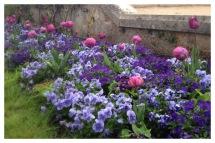 Château de Chenonceau, Chenonceau, France, Castle, Loire Valley, Flower arranging, Floral Design, Pansy, tulip