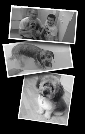 dog bath, bathing a dog, wet dog