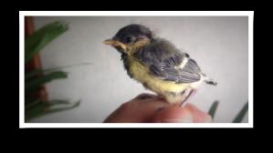 2016_05_21-sparrow2