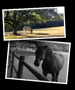 horses, corral, horse pasture