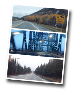 Centennial Bridge, Miramichi, New Brunswick, Provincial Highway, Moose