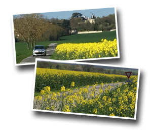 fields of rapeseed in Europe, castle in backdrop