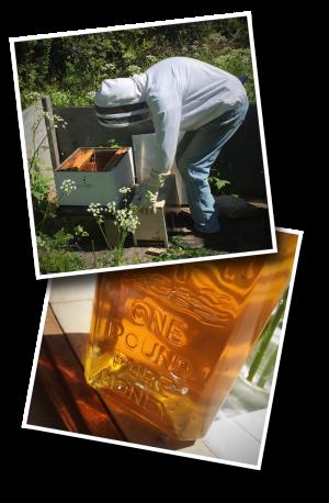 beekeeping, honey, pure honey, wildflower honey, italian bees