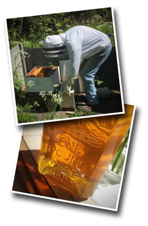 beekeeping, honey, pure honey, wildflower honey, italian bees